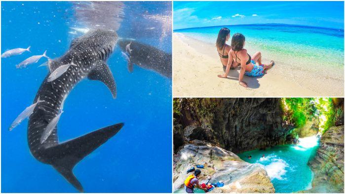 ジンベイザメと泳ぐ +カワサン滝キャニオニング&ビーチ