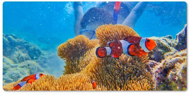 スミロン島の海洋保護区でシュノーケル