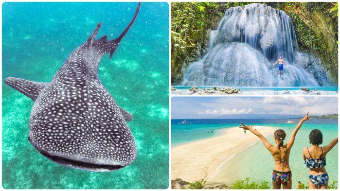 ジンベイザメと泳ぐ +アギニッド滝&スミロン島ツアー