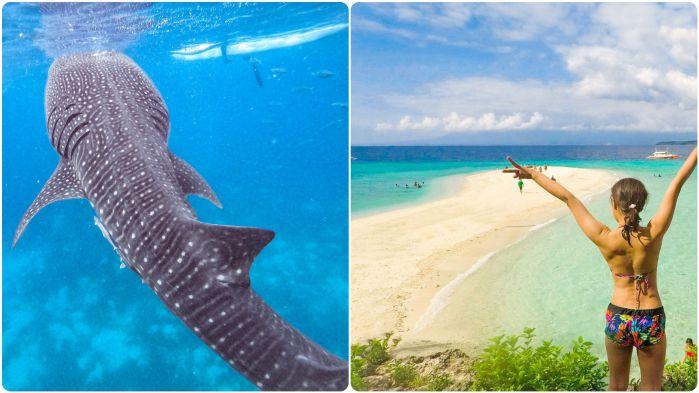 ジンベイザメと泳ぐ +スミロン島&ツマログ滝ツアー