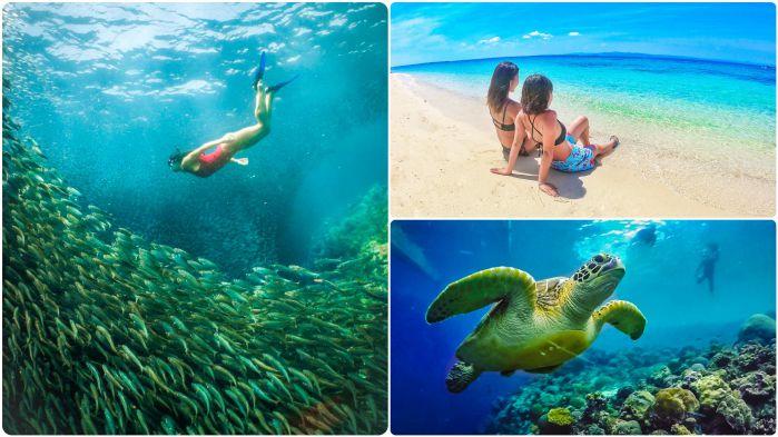 ウミガメと泳ぐ +モアルボアル&ホワイトビーチツアー