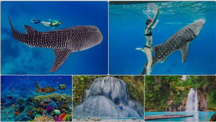 ジンベイザメと泳ぐオプショナルツアー