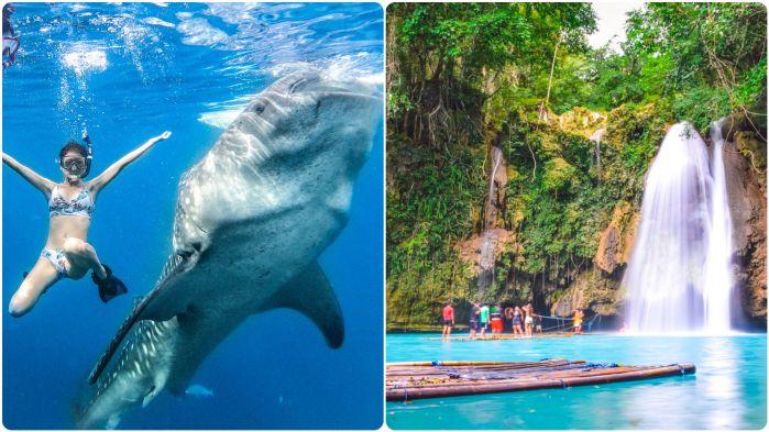 ジンベイザメと泳ぐ +カワサン滝ツアー