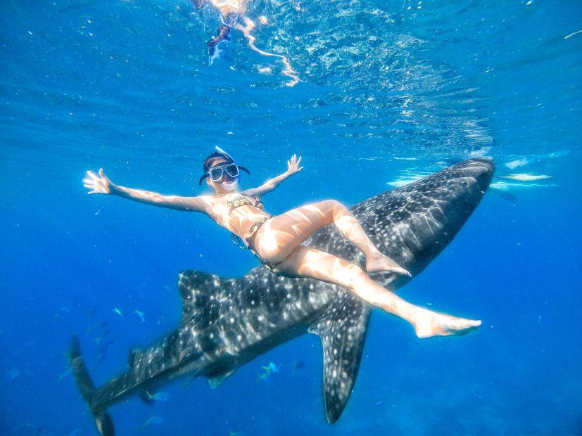 オスロブでジンベイザメと泳ごう!
