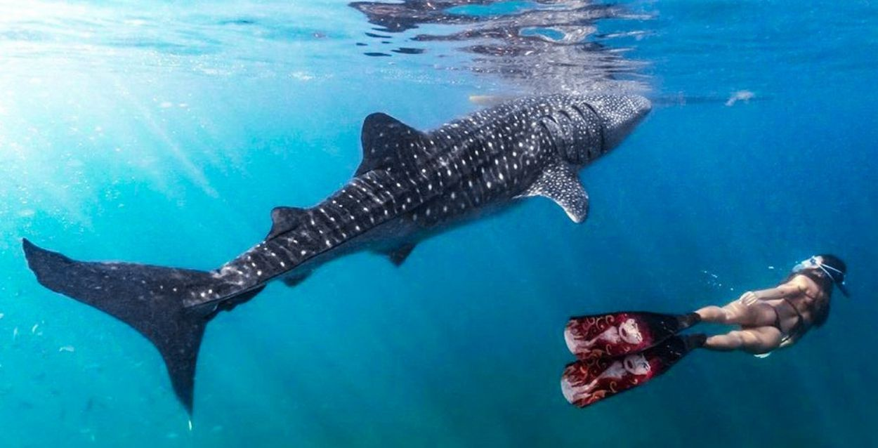 水中カメラGoProで 旅の思い出もばっちり
